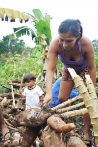 familias colaboram com mandioca para fazer farinha e manter autodemarcacao